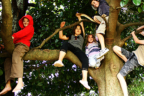 Tree-climbing girls, with some boys.